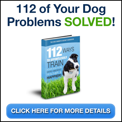Can You Train A Dog To Use A Litter Box?